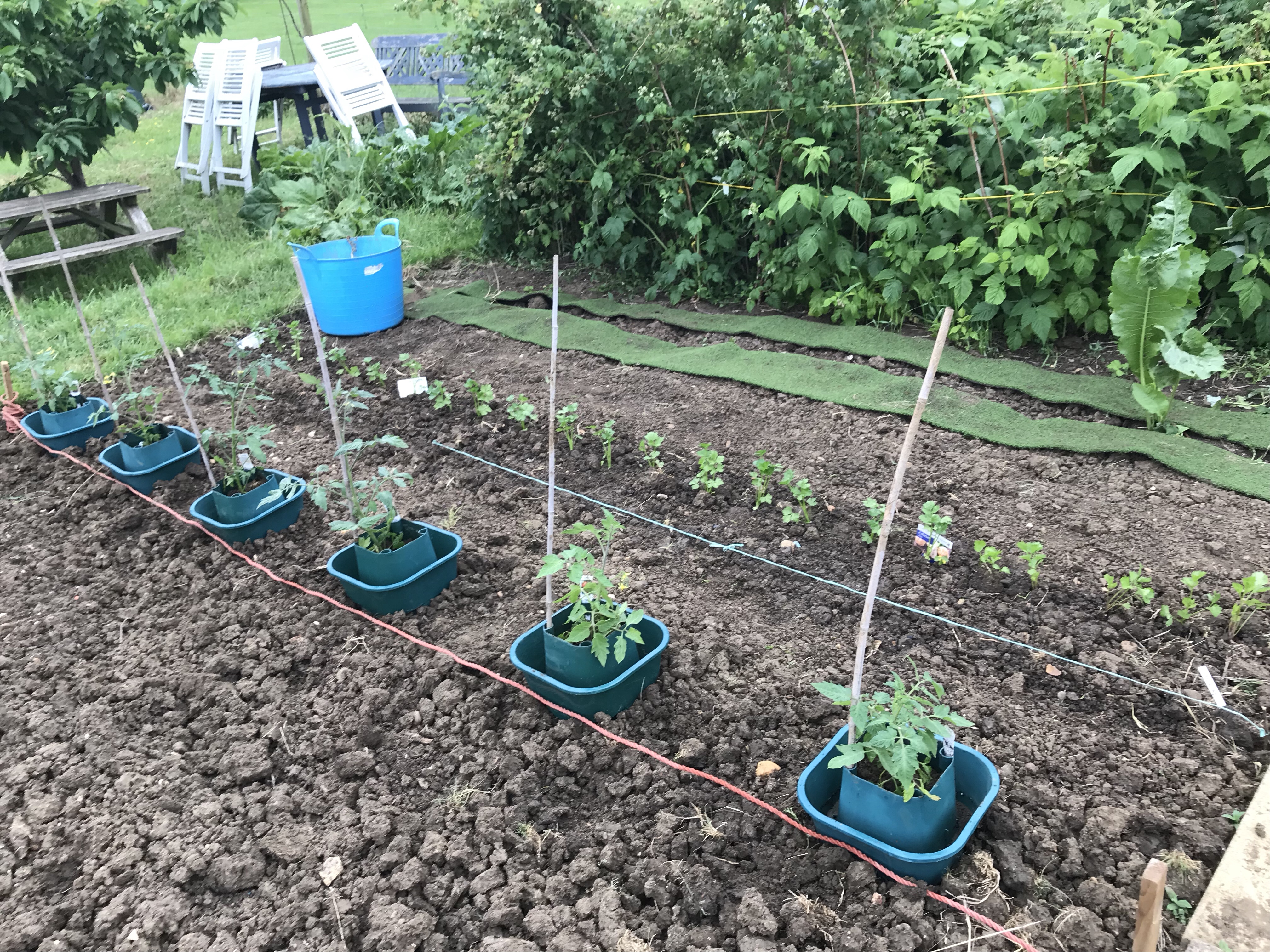Picture of allotment