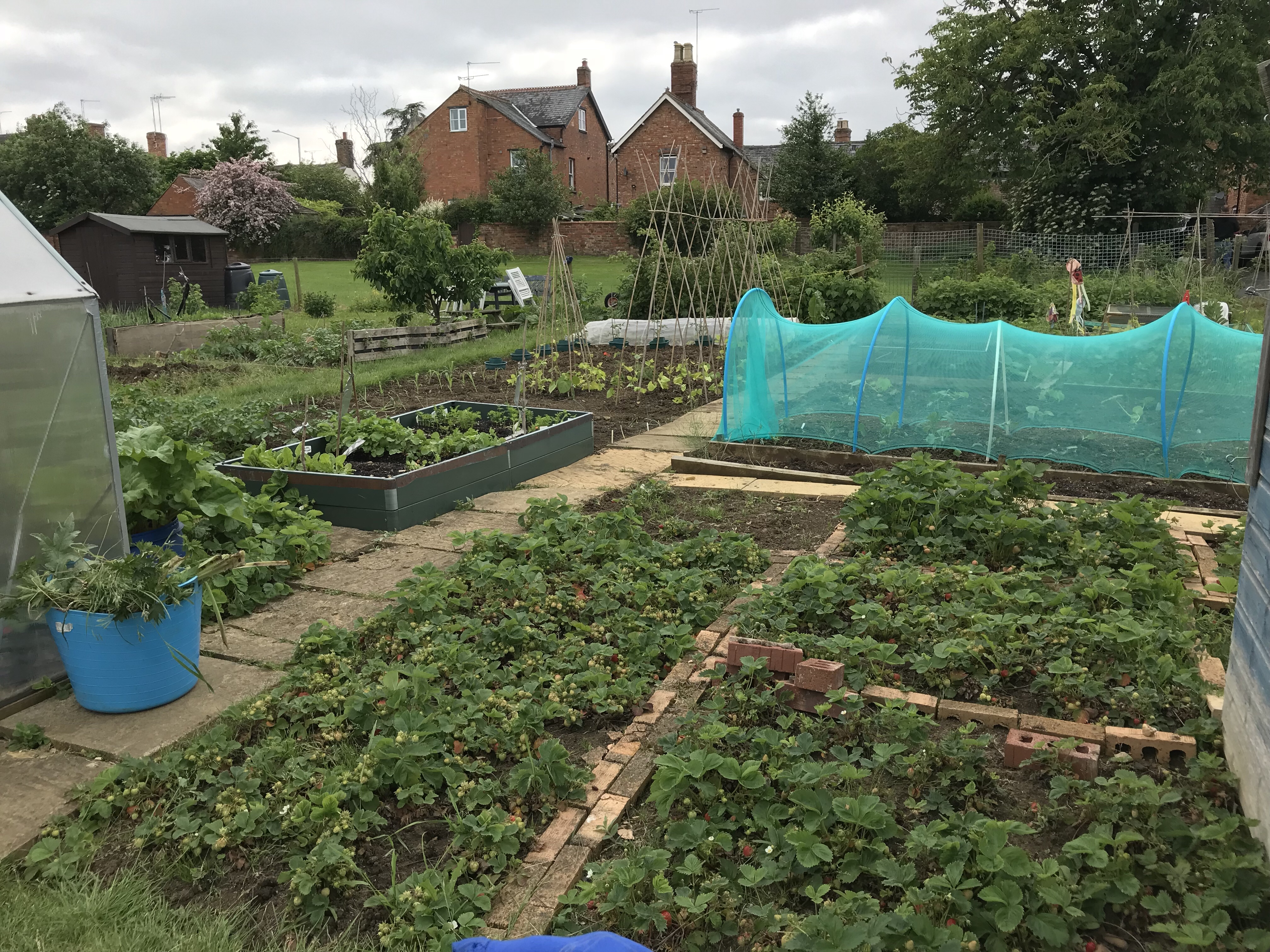 Picture of full allotment